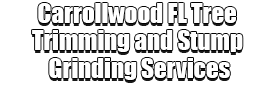 Carrollwood FL Tree Trimming and Stump Grinding Services Home Page Image-We Offer Tree Trimming Services, Tree Removal, Tree Pruning, Tree Cutting, Residential and Commercial Tree Trimming Services, Storm Damage, Emergency Tree Removal, Land Clearing, Tree Companies, Tree Care Service, Stump Grinding, and we're the Best Tree Trimming Company Near You Guaranteed!