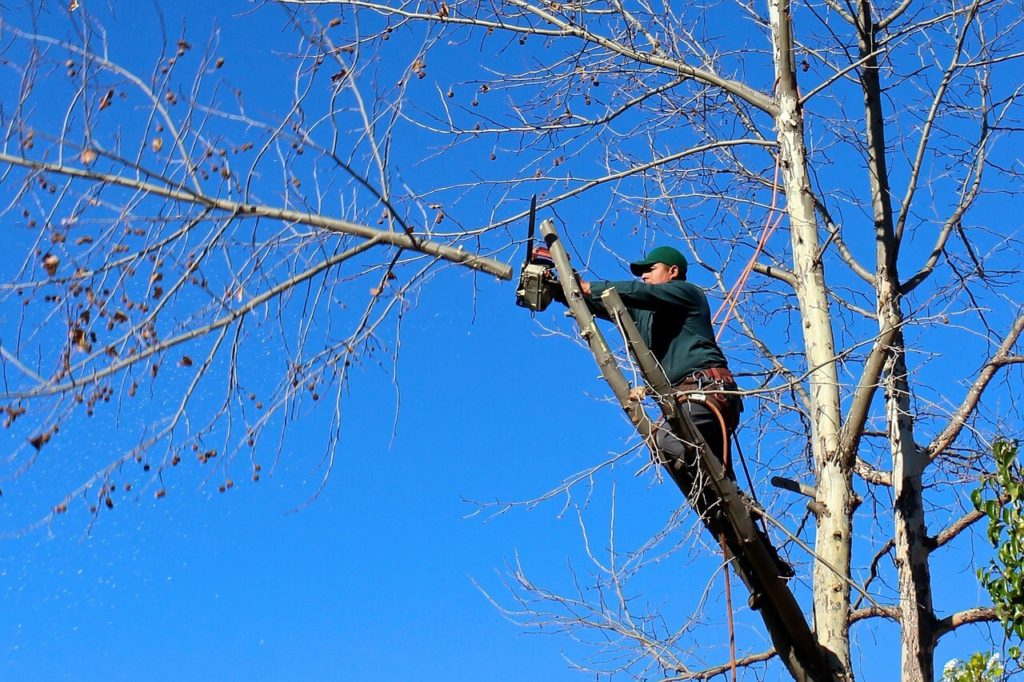 Contact Us-Carrollwood FL Tree Trimming and Stump Grinding Services-We Offer Tree Trimming Services, Tree Removal, Tree Pruning, Tree Cutting, Residential and Commercial Tree Trimming Services, Storm Damage, Emergency Tree Removal, Land Clearing, Tree Companies, Tree Care Service, Stump Grinding, and we're the Best Tree Trimming Company Near You Guaranteed!