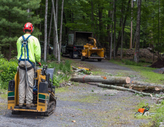 Emergency Tree Removal-Carrollwood FL Tree Trimming and Stump Grinding Services-We Offer Tree Trimming Services, Tree Removal, Tree Pruning, Tree Cutting, Residential and Commercial Tree Trimming Services, Storm Damage, Emergency Tree Removal, Land Clearing, Tree Companies, Tree Care Service, Stump Grinding, and we're the Best Tree Trimming Company Near You Guaranteed!