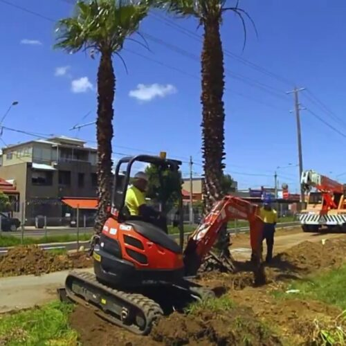 Palm Tree Removal-Carrollwood FL Tree Trimming and Stump Grinding Services-We Offer Tree Trimming Services, Tree Removal, Tree Pruning, Tree Cutting, Residential and Commercial Tree Trimming Services, Storm Damage, Emergency Tree Removal, Land Clearing, Tree Companies, Tree Care Service, Stump Grinding, and we're the Best Tree Trimming Company Near You Guaranteed!