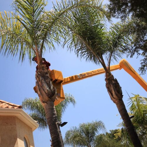 Palm Tree Trimming-Carrollwood FL Tree Trimming and Stump Grinding Services-We Offer Tree Trimming Services, Tree Removal, Tree Pruning, Tree Cutting, Residential and Commercial Tree Trimming Services, Storm Damage, Emergency Tree Removal, Land Clearing, Tree Companies, Tree Care Service, Stump Grinding, and we're the Best Tree Trimming Company Near You Guaranteed!