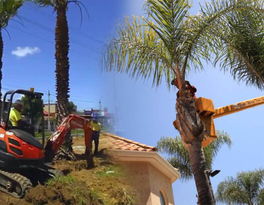 Palm tree trimming & palm tree removal-Carrollwood FL Tree Trimming and Stump Grinding Services-We Offer Tree Trimming Services, Tree Removal, Tree Pruning, Tree Cutting, Residential and Commercial Tree Trimming Services, Storm Damage, Emergency Tree Removal, Land Clearing, Tree Companies, Tree Care Service, Stump Grinding, and we're the Best Tree Trimming Company Near You Guaranteed!