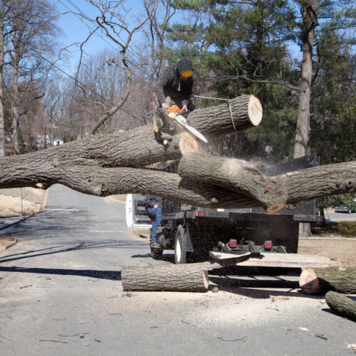 Residential Tree Services-Carrollwood FL Tree Trimming and Stump Grinding Services-We Offer Tree Trimming Services, Tree Removal, Tree Pruning, Tree Cutting, Residential and Commercial Tree Trimming Services, Storm Damage, Emergency Tree Removal, Land Clearing, Tree Companies, Tree Care Service, Stump Grinding, and we're the Best Tree Trimming Company Near You Guaranteed!