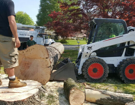 Services-Carrollwood FL Tree Trimming and Stump Grinding Services-We Offer Tree Trimming Services, Tree Removal, Tree Pruning, Tree Cutting, Residential and Commercial Tree Trimming Services, Storm Damage, Emergency Tree Removal, Land Clearing, Tree Companies, Tree Care Service, Stump Grinding, and we're the Best Tree Trimming Company Near You Guaranteed!