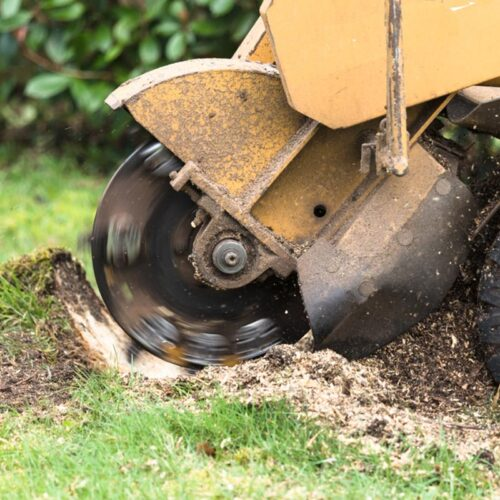 Stump Grinding-Carrollwood FL Tree Trimming and Stump Grinding Services-We Offer Tree Trimming Services, Tree Removal, Tree Pruning, Tree Cutting, Residential and Commercial Tree Trimming Services, Storm Damage, Emergency Tree Removal, Land Clearing, Tree Companies, Tree Care Service, Stump Grinding, and we're the Best Tree Trimming Company Near You Guaranteed!