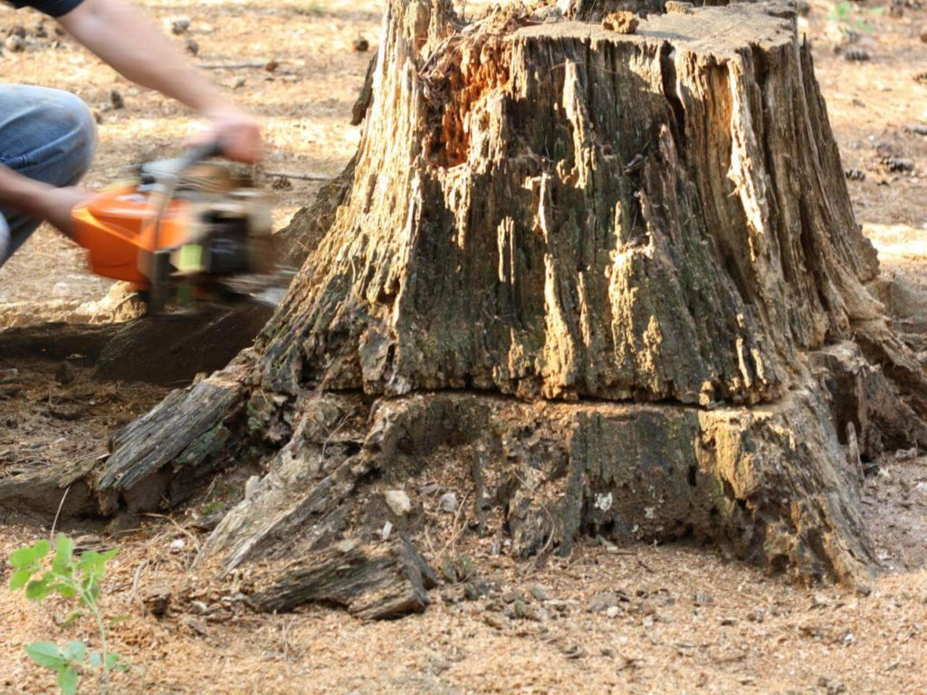 Stump Removal-Carrollwood FL Tree Trimming and Stump Grinding Services-We Offer Tree Trimming Services, Tree Removal, Tree Pruning, Tree Cutting, Residential and Commercial Tree Trimming Services, Storm Damage, Emergency Tree Removal, Land Clearing, Tree Companies, Tree Care Service, Stump Grinding, and we're the Best Tree Trimming Company Near You Guaranteed!