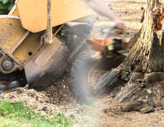 Stump grinding & removal-Carrollwood FL Tree Trimming and Stump Grinding Services-We Offer Tree Trimming Services, Tree Removal, Tree Pruning, Tree Cutting, Residential and Commercial Tree Trimming Services, Storm Damage, Emergency Tree Removal, Land Clearing, Tree Companies, Tree Care Service, Stump Grinding, and we're the Best Tree Trimming Company Near You Guaranteed!