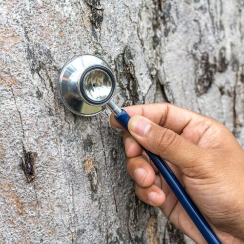 Tree Assessments-Carrollwood FL Tree Trimming and Stump Grinding Services-We Offer Tree Trimming Services, Tree Removal, Tree Pruning, Tree Cutting, Residential and Commercial Tree Trimming Services, Storm Damage, Emergency Tree Removal, Land Clearing, Tree Companies, Tree Care Service, Stump Grinding, and we're the Best Tree Trimming Company Near You Guaranteed!