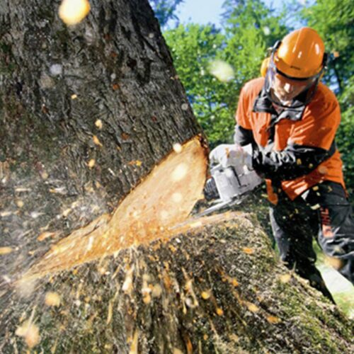 Tree Cutting-Carrollwood FL Tree Trimming and Stump Grinding Services-We Offer Tree Trimming Services, Tree Removal, Tree Pruning, Tree Cutting, Residential and Commercial Tree Trimming Services, Storm Damage, Emergency Tree Removal, Land Clearing, Tree Companies, Tree Care Service, Stump Grinding, and we're the Best Tree Trimming Company Near You Guaranteed!