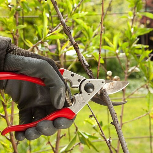 Tree Pruning-Carrollwood FL Tree Trimming and Stump Grinding Services-We Offer Tree Trimming Services, Tree Removal, Tree Pruning, Tree Cutting, Residential and Commercial Tree Trimming Services, Storm Damage, Emergency Tree Removal, Land Clearing, Tree Companies, Tree Care Service, Stump Grinding, and we're the Best Tree Trimming Company Near You Guaranteed!