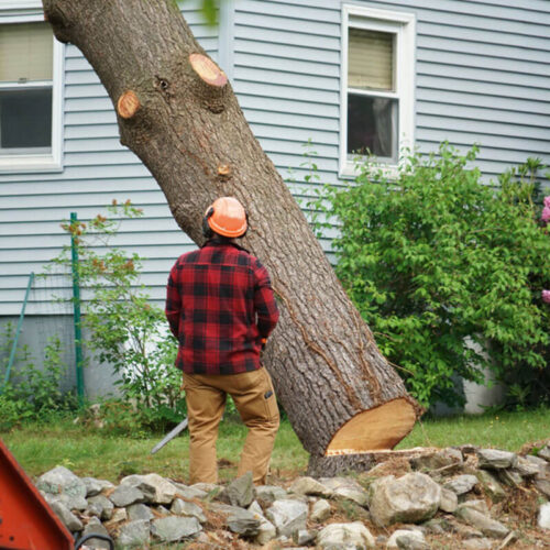 Tree Removal-Carrollwood FL Tree Trimming and Stump Grinding Services-We Offer Tree Trimming Services, Tree Removal, Tree Pruning, Tree Cutting, Residential and Commercial Tree Trimming Services, Storm Damage, Emergency Tree Removal, Land Clearing, Tree Companies, Tree Care Service, Stump Grinding, and we're the Best Tree Trimming Company Near You Guaranteed!