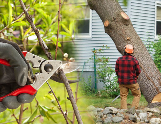 Tree pruning & tree removal-Carrollwood FL Tree Trimming and Stump Grinding Services-We Offer Tree Trimming Services, Tree Removal, Tree Pruning, Tree Cutting, Residential and Commercial Tree Trimming Services, Storm Damage, Emergency Tree Removal, Land Clearing, Tree Companies, Tree Care Service, Stump Grinding, and we're the Best Tree Trimming Company Near You Guaranteed!